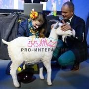 соревнование дойная коза на вечеринку