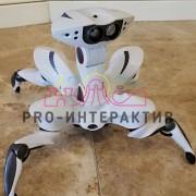 Прокат роботов на мероприятие