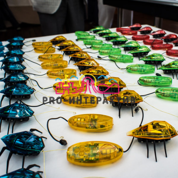Тараканьи бега, гонки радиоуправляемых жуков