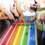 Тараканьи бега: веселье и азарт