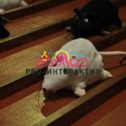 Аренда мышиных бегов