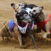 Организация собачьих бегов