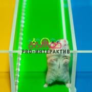Мышиные бега: испытание