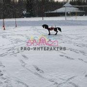 Кольцеброс с фигурой пони в аренду на детский праздник